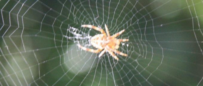 search spider web